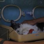 реанимационный блок для животных в Черкассах в ветеринарной клиннике